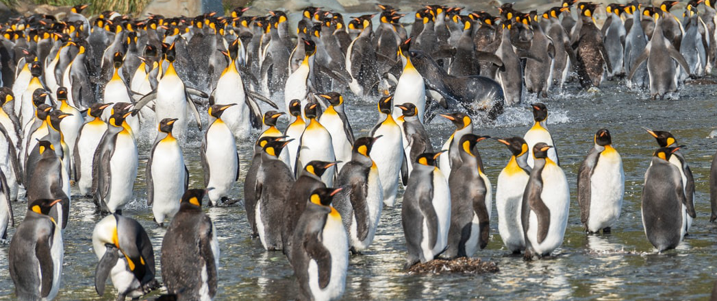 Group of penguins on a beach