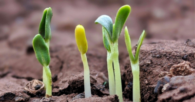 Very young, vibrant green plant shoots just rising and opening out of cracks in rich brown dirt. Image credit: Buds (https://unsplash.com/s/photos/buds) by Chetan Kolte, licensed Unsplash (https://unsplash.com/license).